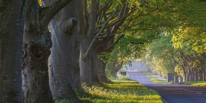 ağaç gövdesinde bir kovuk