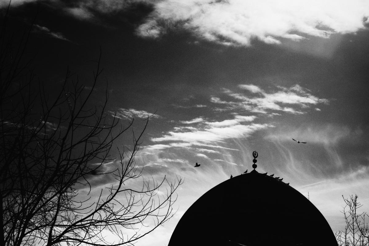 muhammed palewi